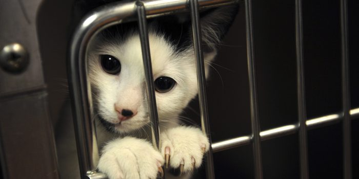 The Importance of Animal Shelter in the Community