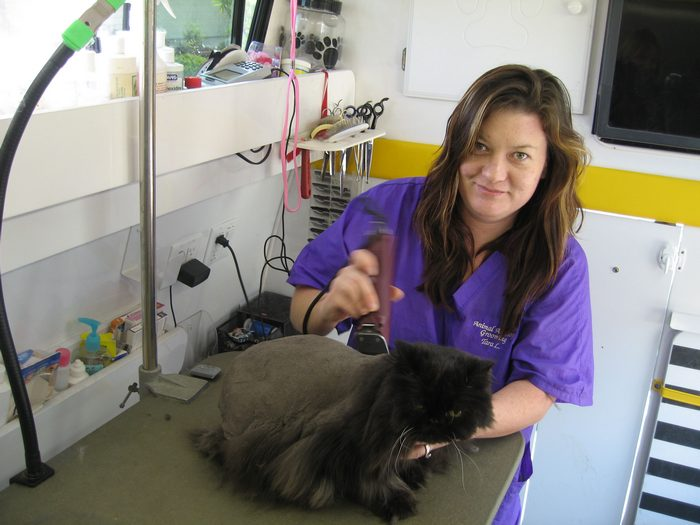 Cat Grooming and Its Importance