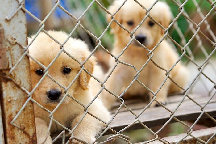 How to Check if the Animal Shelter has Your Lost Pet