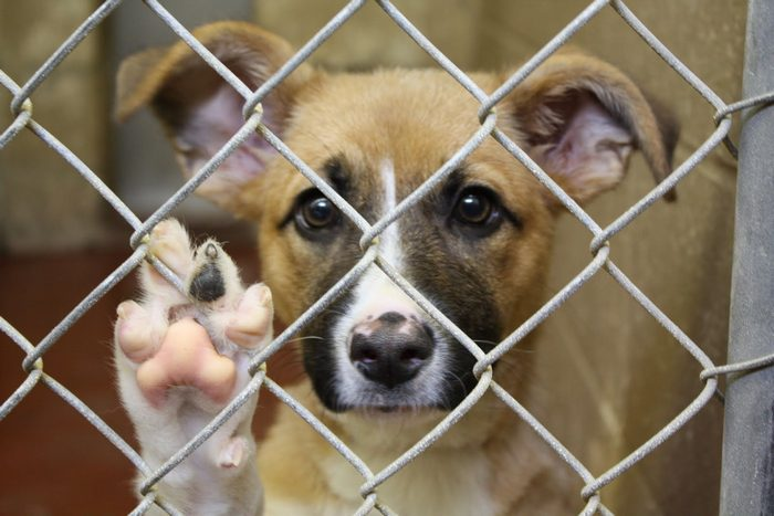 The Advantages and Disadvantages of Animal Shelters