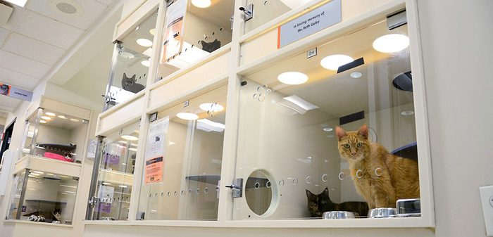 Who Owns the Animal Shelter?